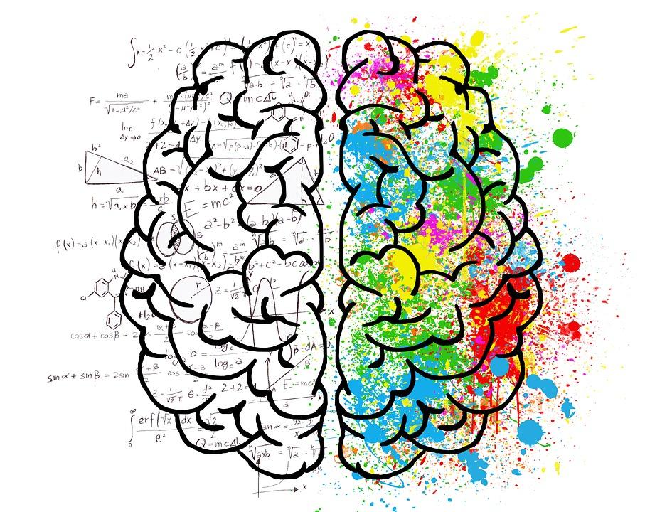 To hjernehalvdele