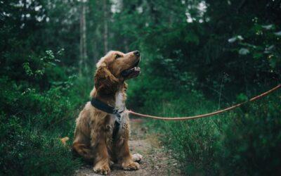 Dette skal du vide inden du får hund- Har du tid?