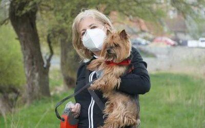 Kan hunde lugte sygdomme? Et nyt studie skal klarlægge om det kan lade sig gøre