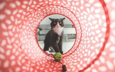 Find innovativt hunde- og kattelegetøj, som kan holde til en masse leg