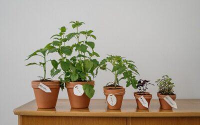 Hvilke planter skal du have stående i stuevinduet?
